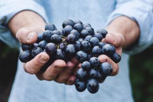 Nuevas medidas para la agricultura y alimentación
