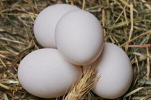 "El ""huevo de suelo"" ya cotiza en la Lonja Toledana de Fedeto"