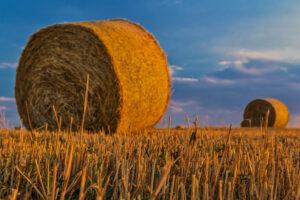 El sector Agroalimentario ya puede solicitar «Focal 2021»